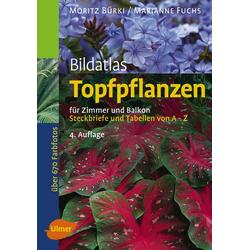 Bildatlas Topfpflanzen für Zimmer und Balkon: Buch von Moritz Bürki/ Marianne Fuchs