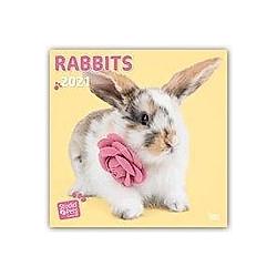 Rabbits - Kaninchen 2021