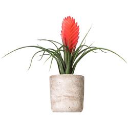 Kunstpflanze Tillandsie Soledo, Creativ green, Höhe 29 cm rot