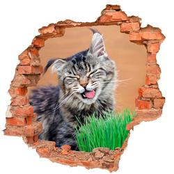 DesFoli Wandtattoo Katze Katzengras Tier Natur B0426 bunt 70 cm x 68 cm