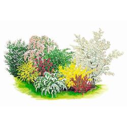 BCM Gehölze Blütenhecke wurzelverpackt Set, 8 Pflanzen