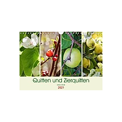 Quitten und Zierquitten (Wandkalender 2021 DIN A4 quer)