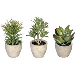 Künstliche Zimmerpflanze Sukkulenten Sukkulente, Creativ green, Höhe 15 cm, im Zementtopf, 3er Set
