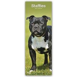 Staffordshire Bullterrier - Staffies 2021