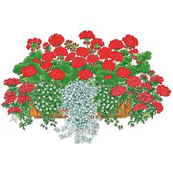 BCM Balkonpflanze Farbfeuer Set, 16 Pflanzen mit Erde