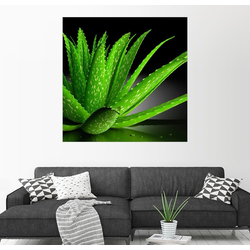 Posterlounge Wandbild, Aloe Vera 100 cm x 100 cm