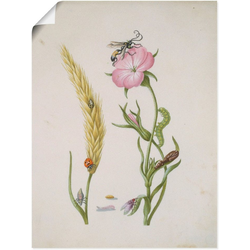 Artland Wandbild Marienkäfer Kornrade Larven und Puppen., Pflanzen (1 Stück) 45 cm x 60 cm