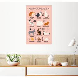 Posterlounge Wandbild, Kaninchenrassen 100 cm x 150 cm