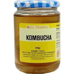 Kombucha Teepilz