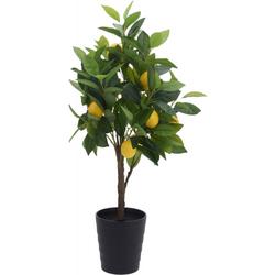 Zitronenbaum im Topf
