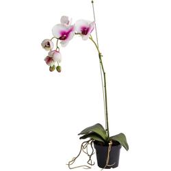 Kunstorchidee Orchidee Orchidee, Botanic-Haus, Höhe 65 cm