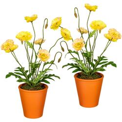 Creativ green Künstliche Zimmerpflanze, im Tontopf (2er Set) gelb Zimmerpflanze Zimmerpflanzen Kunstpflanzen Wohnaccessoires