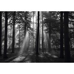 Fototapete Forrest morning in black & white, glatt bunt 6 St.