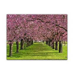 Bilderdepot24 Leinwandbild, Leinwandbild - Kirschblüten 70 cm x 50 cm
