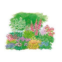 BCM Beetpflanze Schattenpflanzen, (Set), 11 Pflanzen bunt Beetpflanzen Garten Balkon