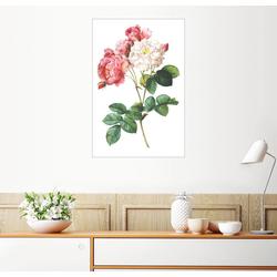 Posterlounge Wandbild, Rosa Damascena 60 cm x 90 cm