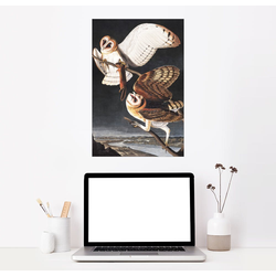 Posterlounge Wandbild, Schleiereule 20 cm x 30 cm