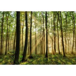 Fototapete Forest, glatt 3 m x 2,23 m