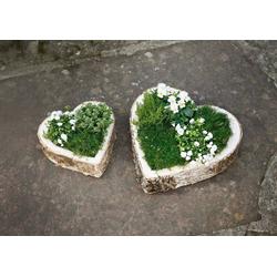 HomeLiving Blumentopf Birke