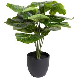 Künstliche Zimmerpflanze Alocasia Alocasia, Botanic-Haus, Höhe 43 cm