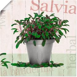Artland Wandbild Salbei, Pflanzen (1 Stück) 50 cm x 50 cm