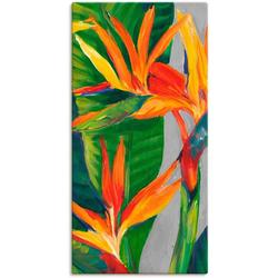 Artland Wandbild Paradiesvogel II, Pflanzen (1 Stück) 30 cm x 60 cm