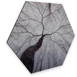 Wall-Art Metallbild Blick in die Baumkronen Metallbild, (1 Stück) 55 cm x 0,3 cm x 47 cm