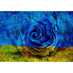 Consalnet Vliestapete Blau-Gelbe Rose, floral 4,16 m x 2,54 m