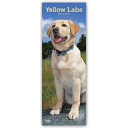 Yellow Labrador Retriever - Gelbe Labradore 2021