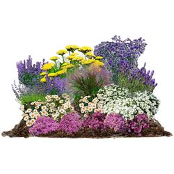 BCM Beetpflanze Pflegeleicht Set, 18 Pflanzen