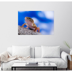 Posterlounge Wandbild, Leopardgecko auf Blau 130 cm x 90 cm