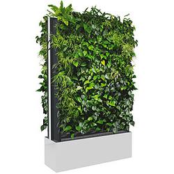 C+P Pflanzenwand auf Füßen, mit Trays für beidseitige Bepflanzung, b120xt40xh232cm