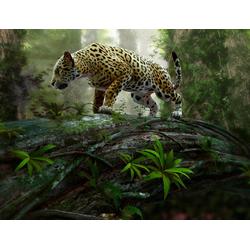 Fototapete Jaguar on the Prowl, glatt 3,50 m x 2,60 m