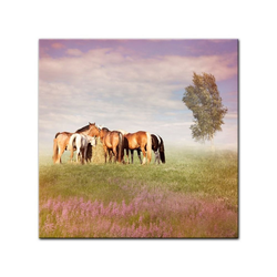 Bilderdepot24 Leinwandbild, Leinwandbild - Pferde III 80 cm x 80 cm