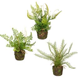 Künstliche Zimmerpflanze Set aus Farnpflanzen auf Wurzelballen Farn, Creativ green, Höhe 22 cm, 3er Set