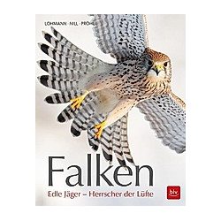 Falken. Michael Lohmann  - Buch