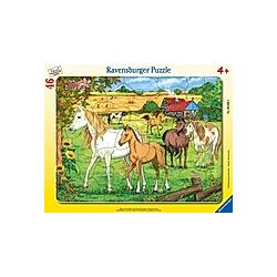 Pferde auf der Koppel (Rahmenpuzzle)