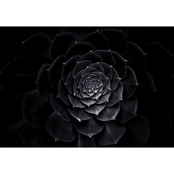Consalnet Vliestapete Schwarze Rose, floral 1,04 m x 0,7 m