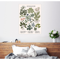 Posterlounge Wandbild, Herbarium 60 cm x 80 cm