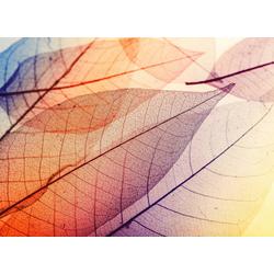 living walls Fototapete Designwalls Limpid Leaf 1, glatt, (5 St)