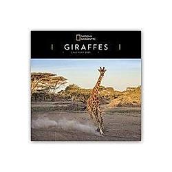 Giraffes - Giraffe - Giraffen 2021
