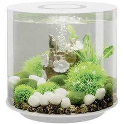 Oase 72063 Aquarium 15l mit LED-Beleuchtung