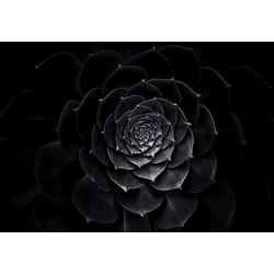Consalnet Vliestapete Schwarze Rose, floral 2,54 m x 1,84 m