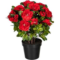 Künstliche Zimmerpflanze Wolga Azalee, DELAVITA, Höhe 32 cm rot