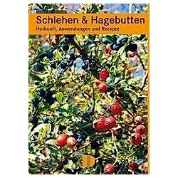 Schlehen & Hagebutten