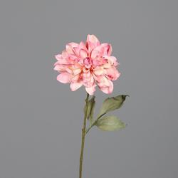 Dahlie rosé