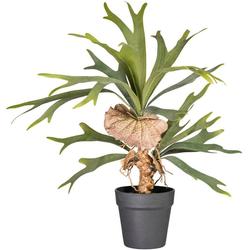 Kunstpflanze Platycerium, Creativ green, Höhe 60 cm 60 cm
