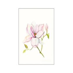 Komar Poster Magnolia Shine, Pflanzen, Blätter, Höhe: 70cm 30 cm x 40 cm