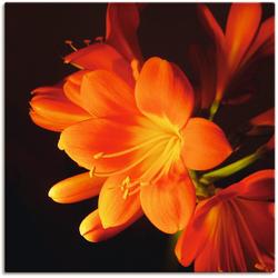 Artland Wandbild Clivie in leuchtendem Orange, Blumen (1 Stück) 50 cm x 50 cm