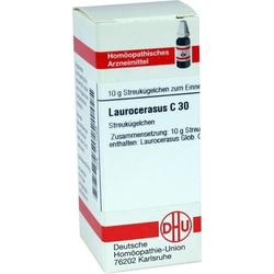 LAUROCERASUS C30